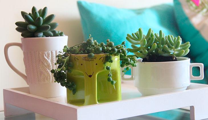 Como decorar sua casa usando suculentas