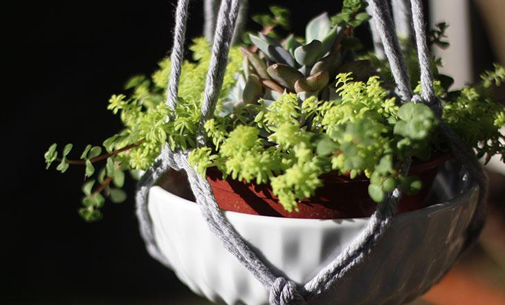 D.I.Y: suporte de macramê para as plantinhas