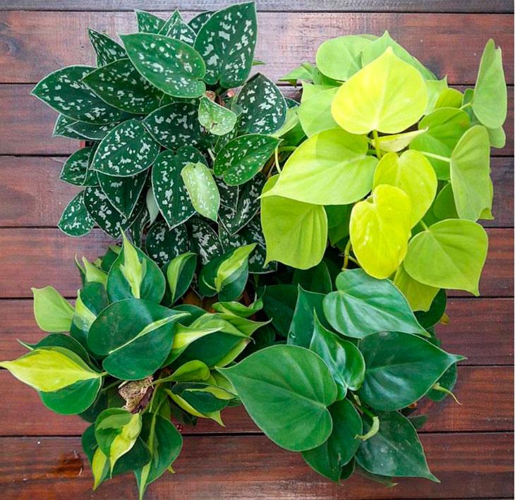 Urban jungle 5 plantas para ter dentro do apartamento for Plantas para dentro de casa sombra